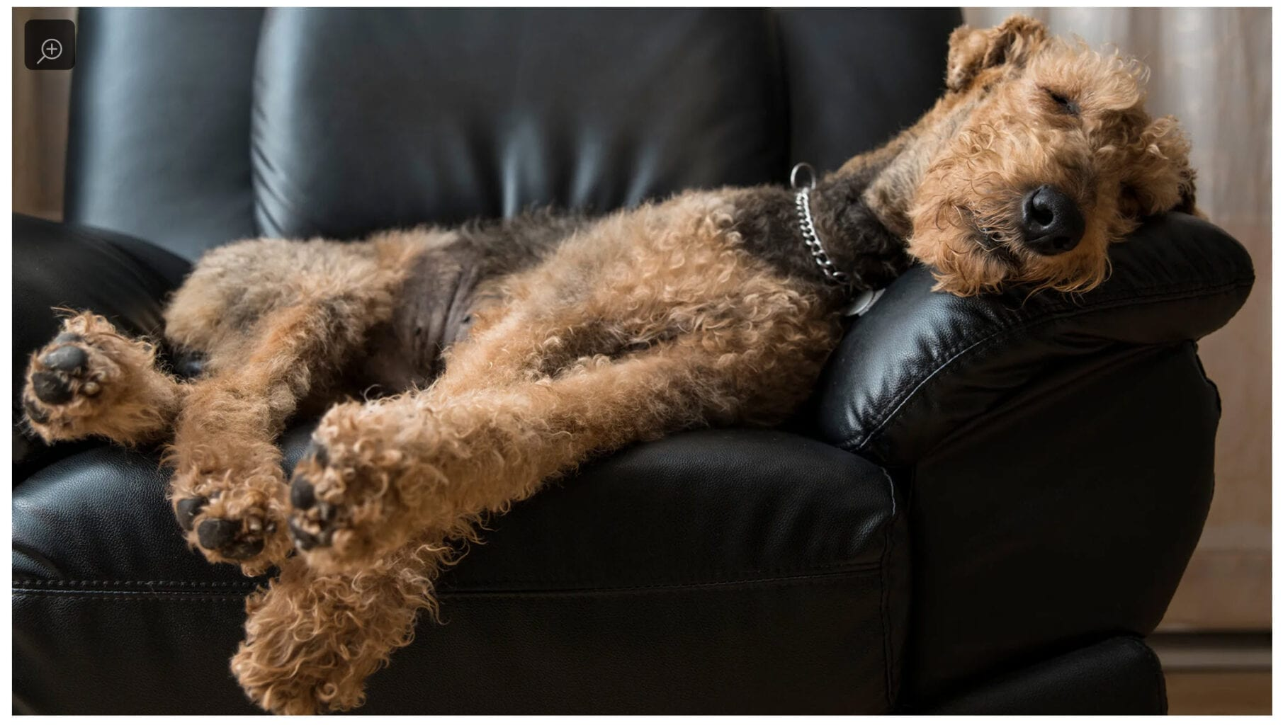 Funny (and not true) Study Finds Dogs Twitching In Sleep Are Dreaming About Tearing Owners Limb From Limb – [News: Dreaming]